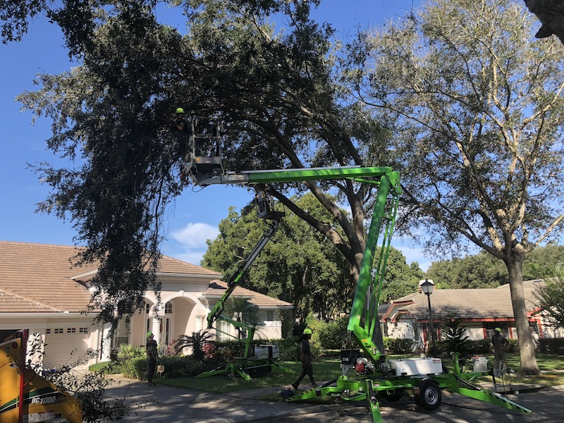 IMG 2680 - Before You Hack a Tree: Why Hire a Certified Arborist?