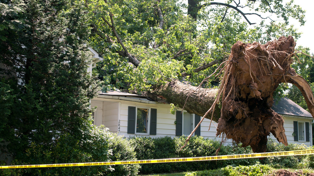 Are Your Trees Ready for a Hurricane or Tropical Storm 1200x675 - Are Your Trees Ready for a Hurricane or Tropical Storm?