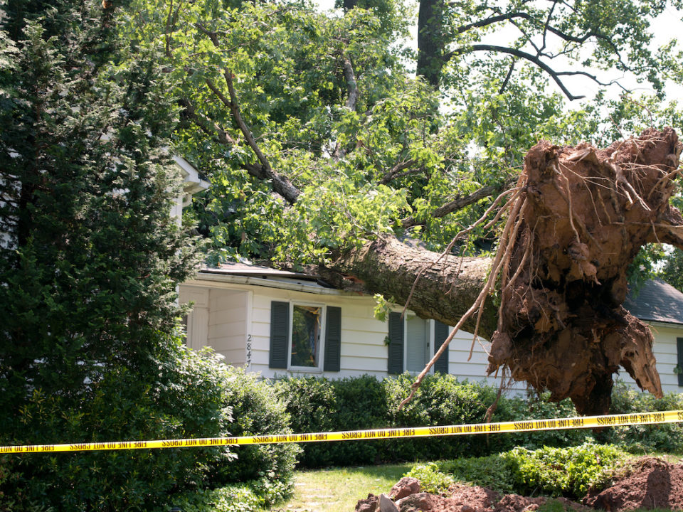 Are Your Trees Ready for a Hurricane or Tropical Storm 960x720 - Are Your Trees Ready for a Hurricane or Tropical Storm?
