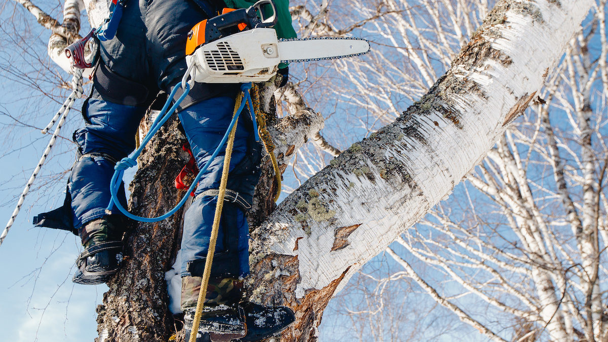 Eight Reasons to Hire an ISA Certified Arborist for Your Tree Care 1200x675 - Eight Reasons to Hire an ISA Certified Arborist for Your Tree Care