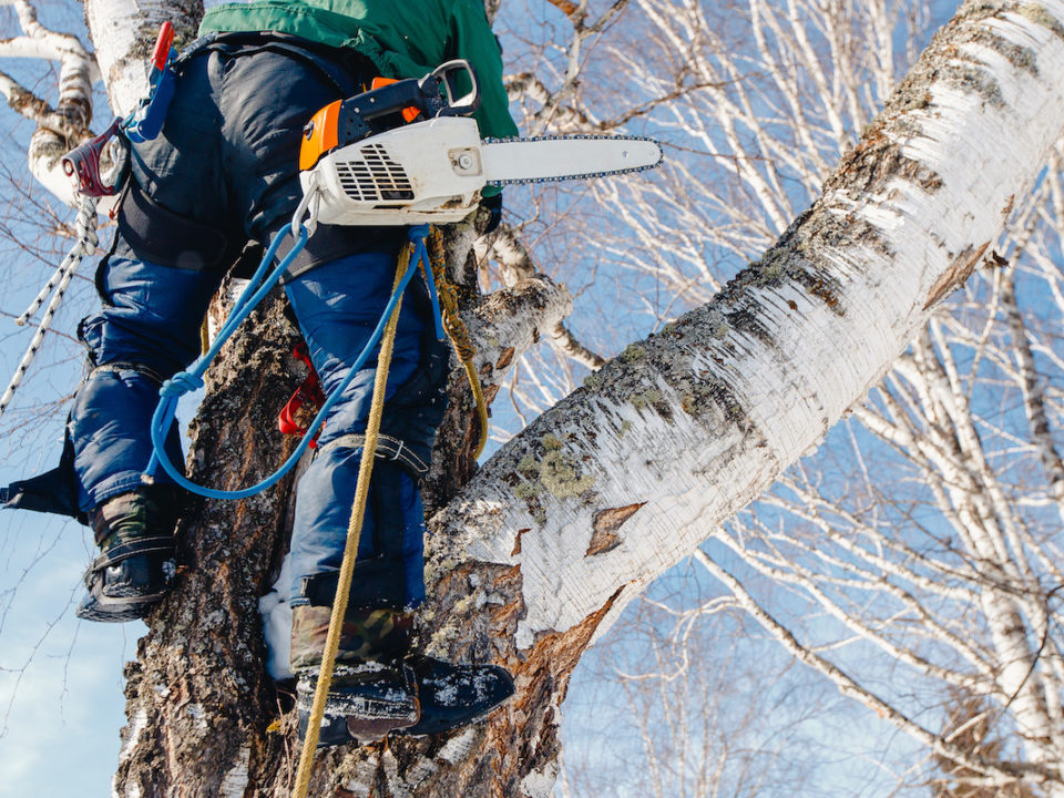 Eight Reasons to Hire an ISA Certified Arborist for Your Tree Care 960x720 - Eight Reasons to Hire an ISA Certified Arborist for Your Tree Care