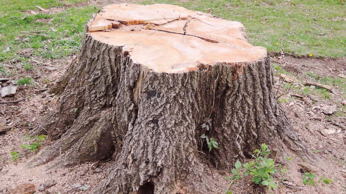 Six Top Benefits of Tree Stump Grinding 1200x675 - Six Top Benefits of Tree Stump Grinding