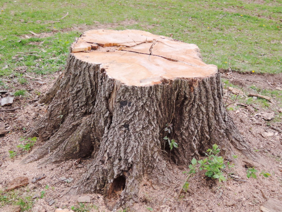 Six Top Benefits of Tree Stump Grinding 960x720 - Six Top Benefits of Tree Stump Grinding
