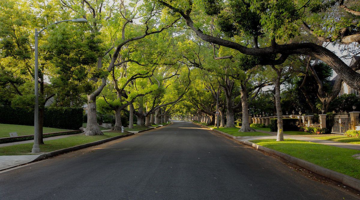 Top Fourteen Benefits of Trees in Palm Harbor 1200x669 - Top Fourteen Benefits of Trees in Palm Harbor