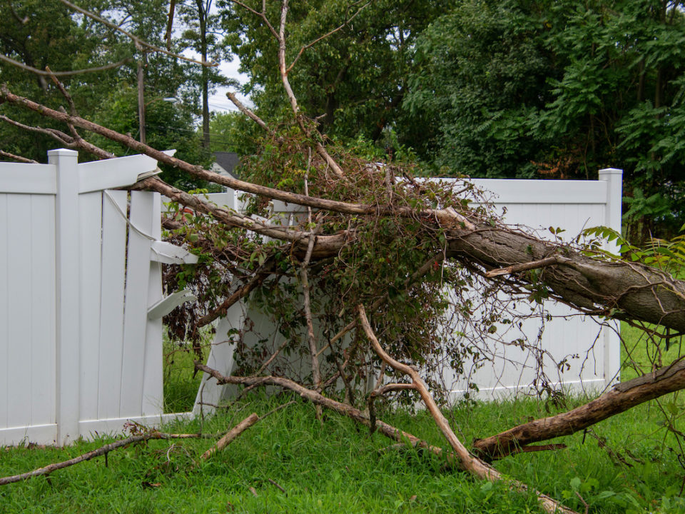 Nine Signs That You Need Emergency Tree Services 960x720 - Nine Signs That You Need Emergency Tree Services