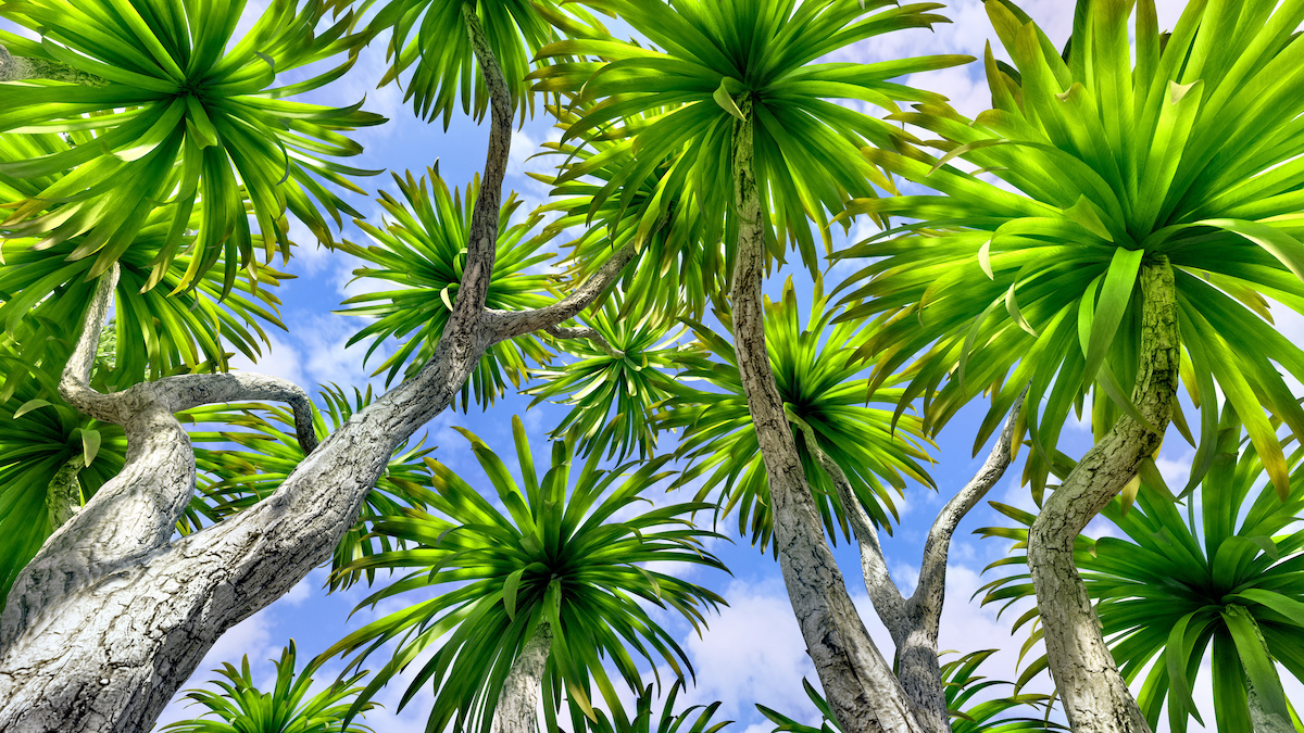 Do You Know the Official Florida State Tree - Florida Gardening Danger:  Poisonous Palm Trees