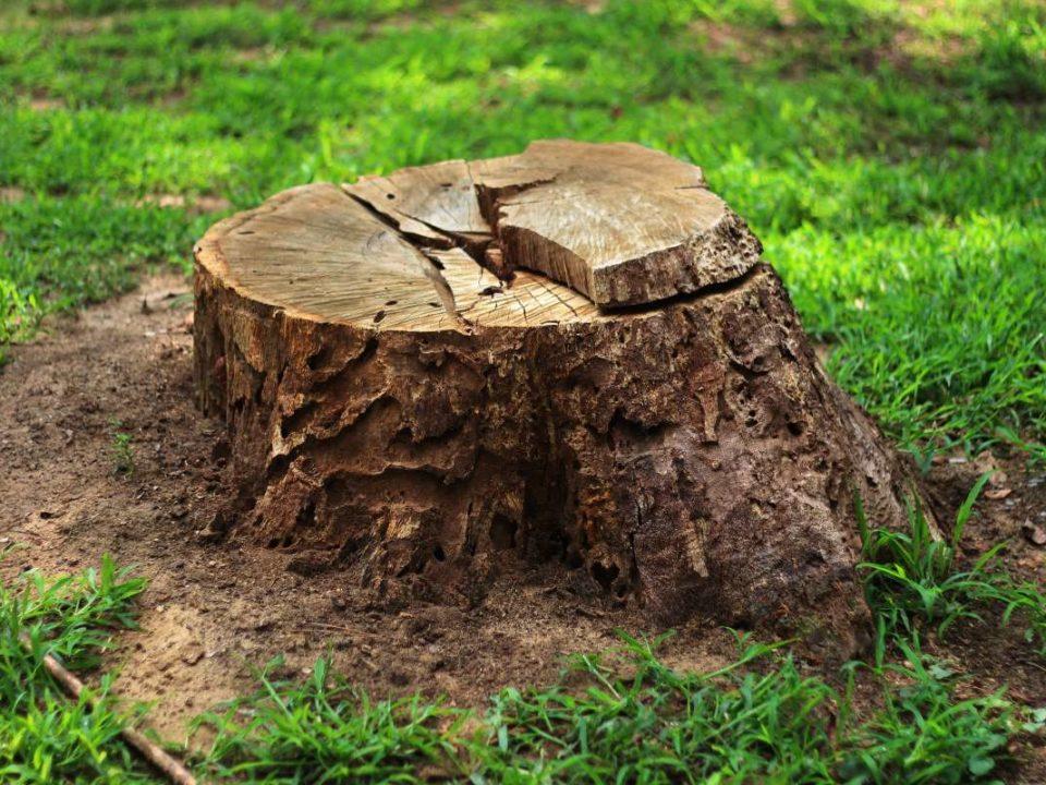 Warner Tree Service 2.3.2020 Main Pic 960x720 - Why Should I Grind Down My Tree Stump?
