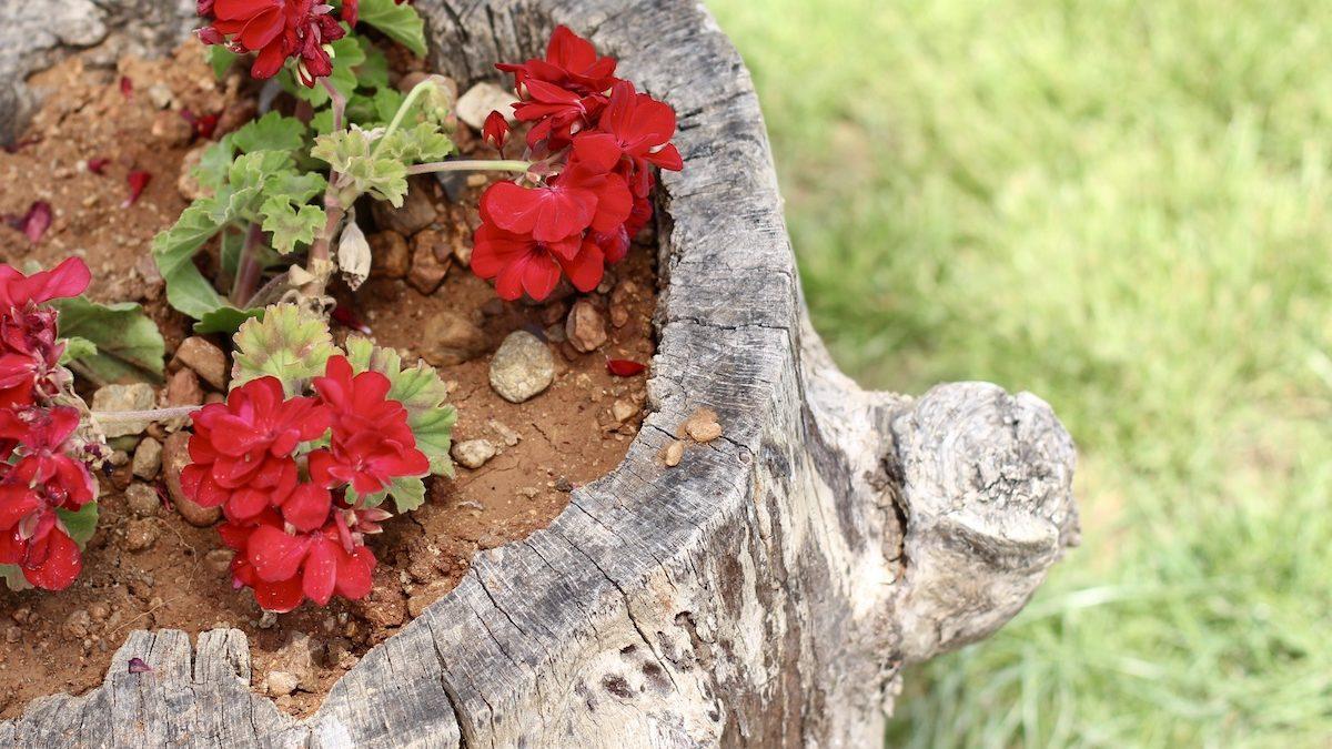 6 Ways to Decorate Your Tree Stump 1200x675 - 6 Ways to Decorate Your Tree Stump