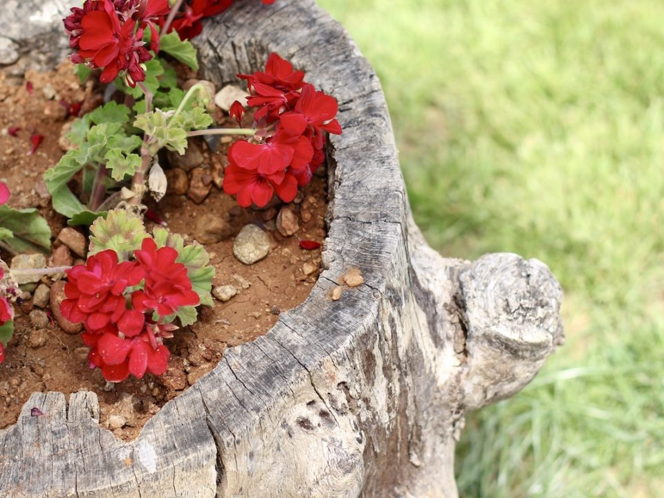 6 Ways to Decorate Your Tree Stump 960x720 - 6 Ways to Decorate Your Tree Stump