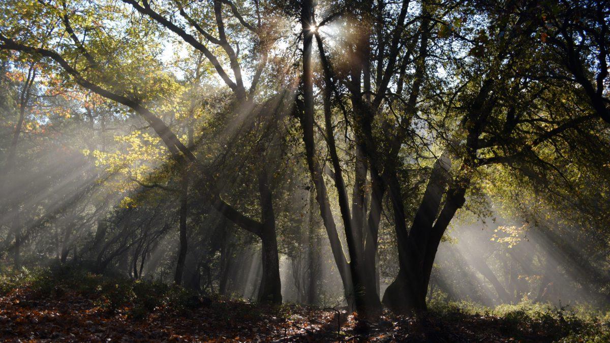 florida trees