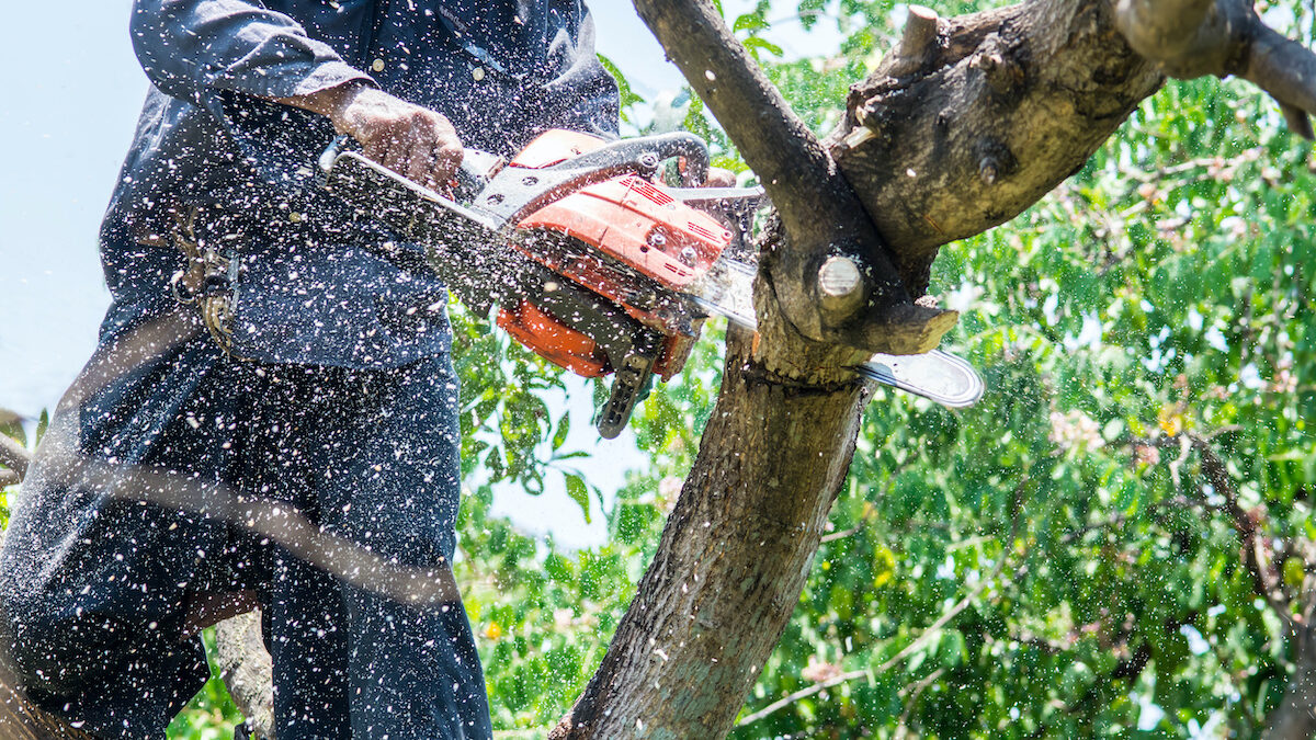 Benefits of Tree Removal Services 1200x675 - Benefits of Tree Removal Services