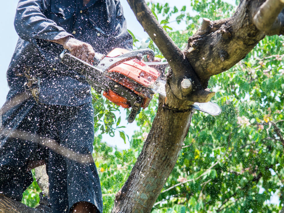 Benefits of Tree Removal Services 960x720 - Benefits of Tree Removal Services
