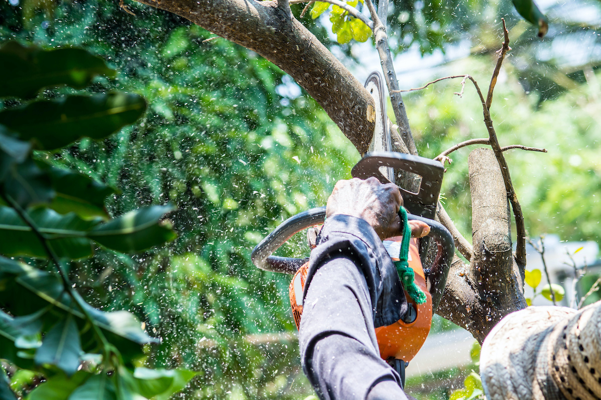Tree Removal Services - Benefits of Tree Removal Services