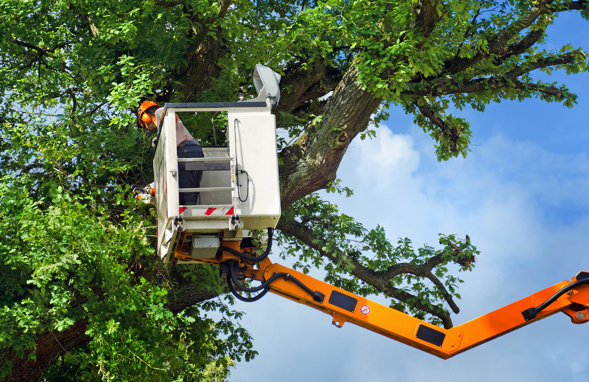 Tree Removal - Benefits of Tree Removal Services