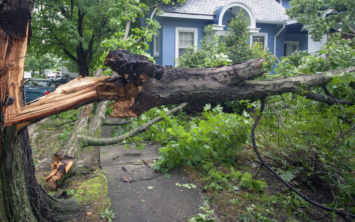 hurricane season tree - Are Your Trees Ready for the Next Big Florida Storm?