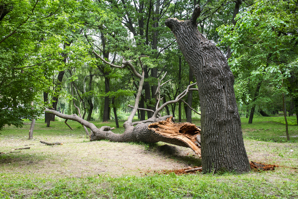tree removal - 9 Signs of Poor Health in Trees