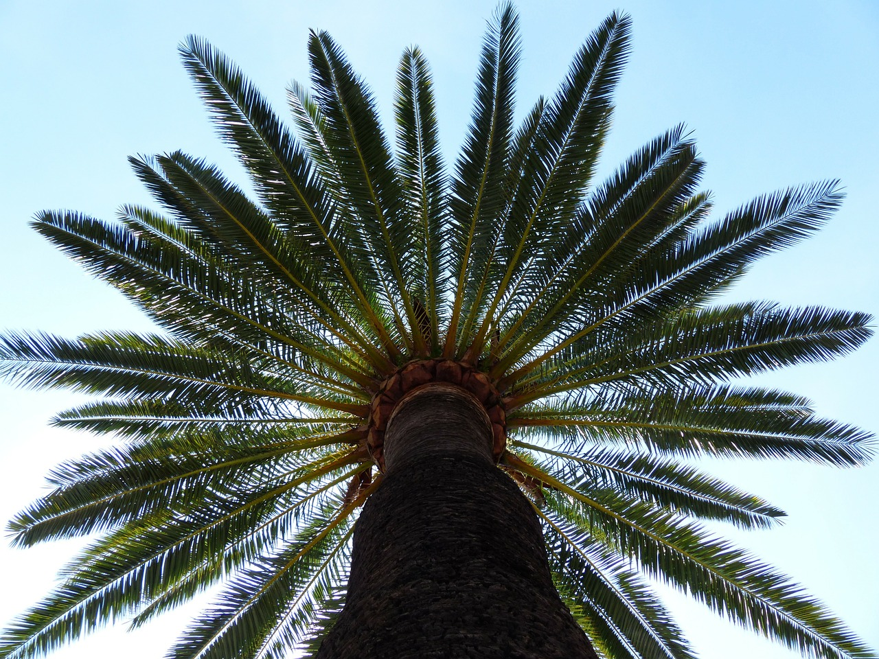 palm 187045 1280 - Before You Hack a Tree: Why Hire a Certified Arborist?