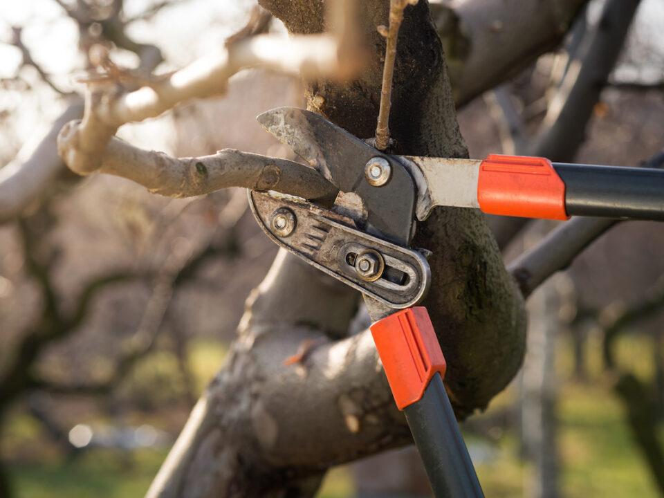 winter tree service