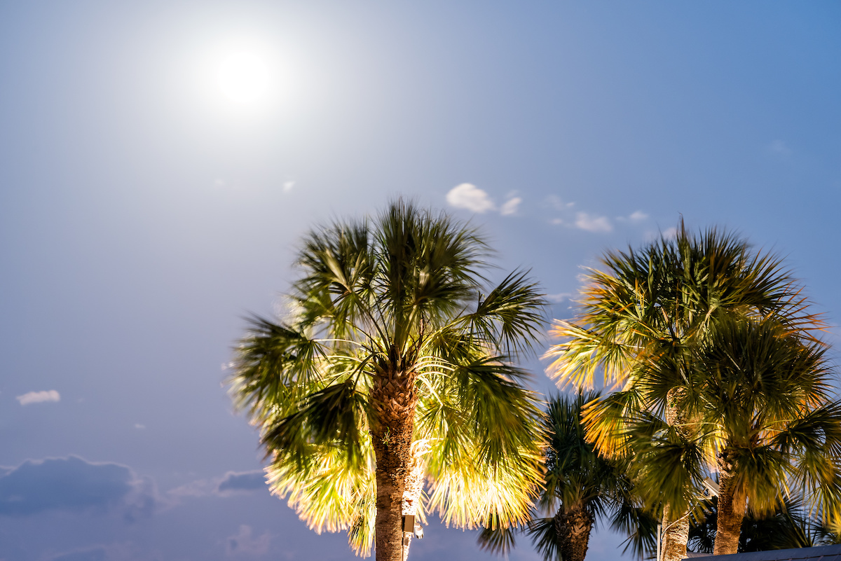 AdobeStock 218762518 - Are Your Trees Ready for the Next Big Florida Storm?