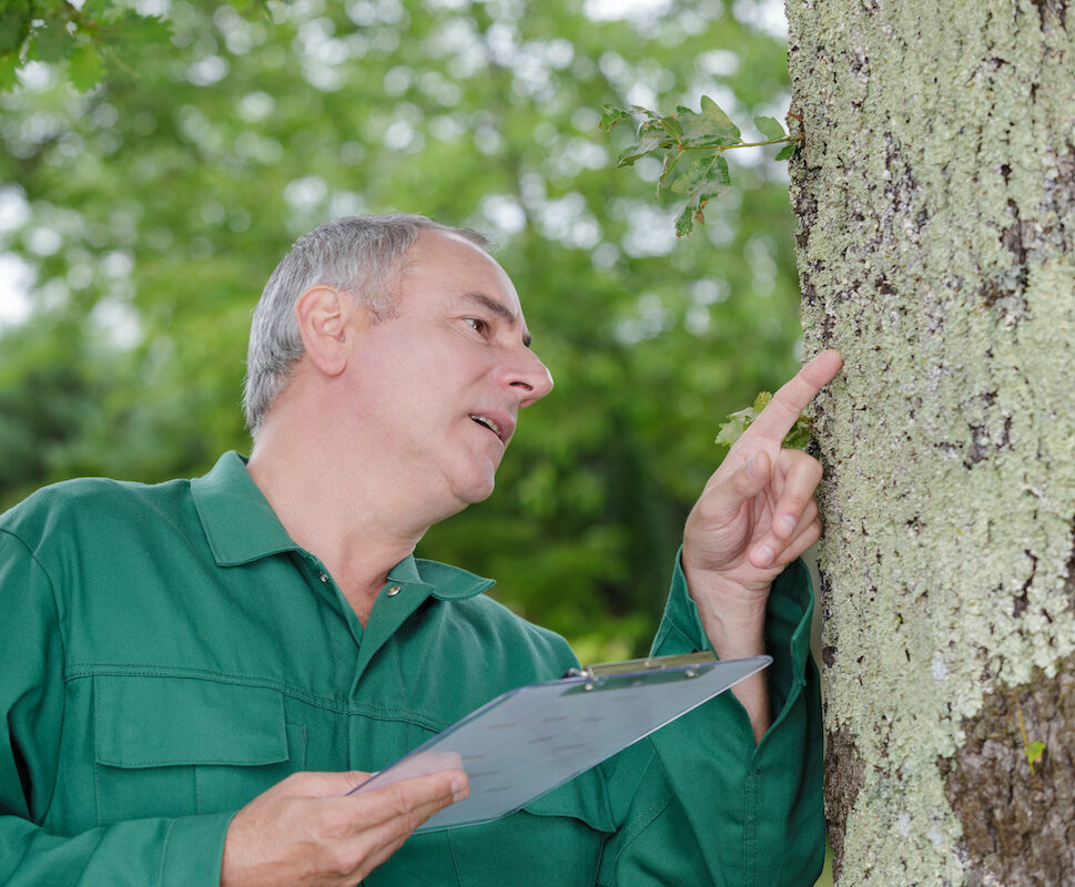 arborist inspecting tree e1613678759908 - 9 Signs of Poor Health in Trees