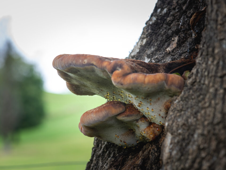 fungus on tree 960x720 - 9 Signs of Poor Health in Trees