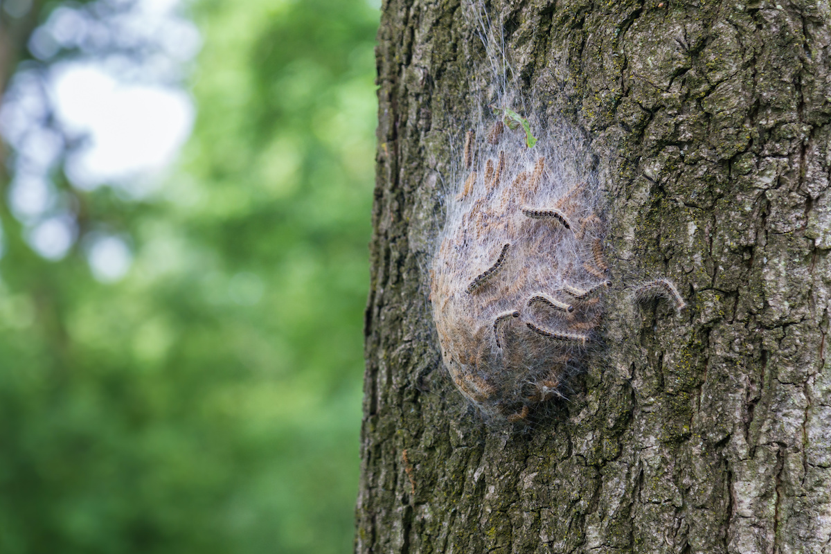 insect infestation on trunk - 9 Signs of Poor Health in Trees