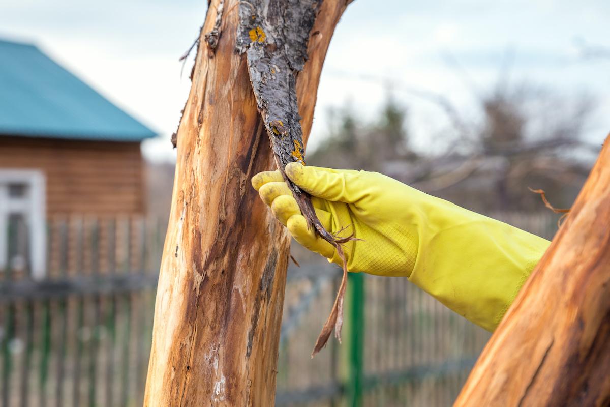 peeling tree bark - 9 Signs of Poor Health in Trees