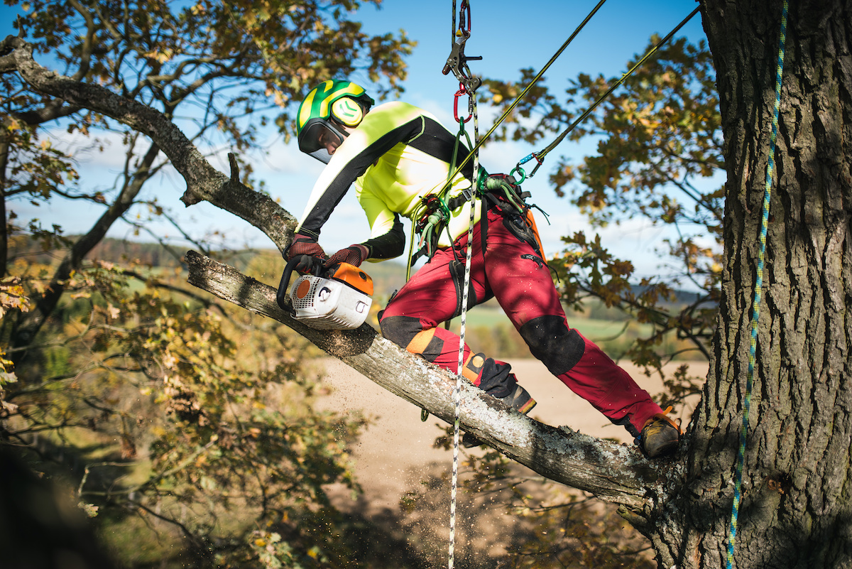 Arborist positioned on think tree limb high up - Before You Hack a Tree: Why Hire a Certified Arborist?