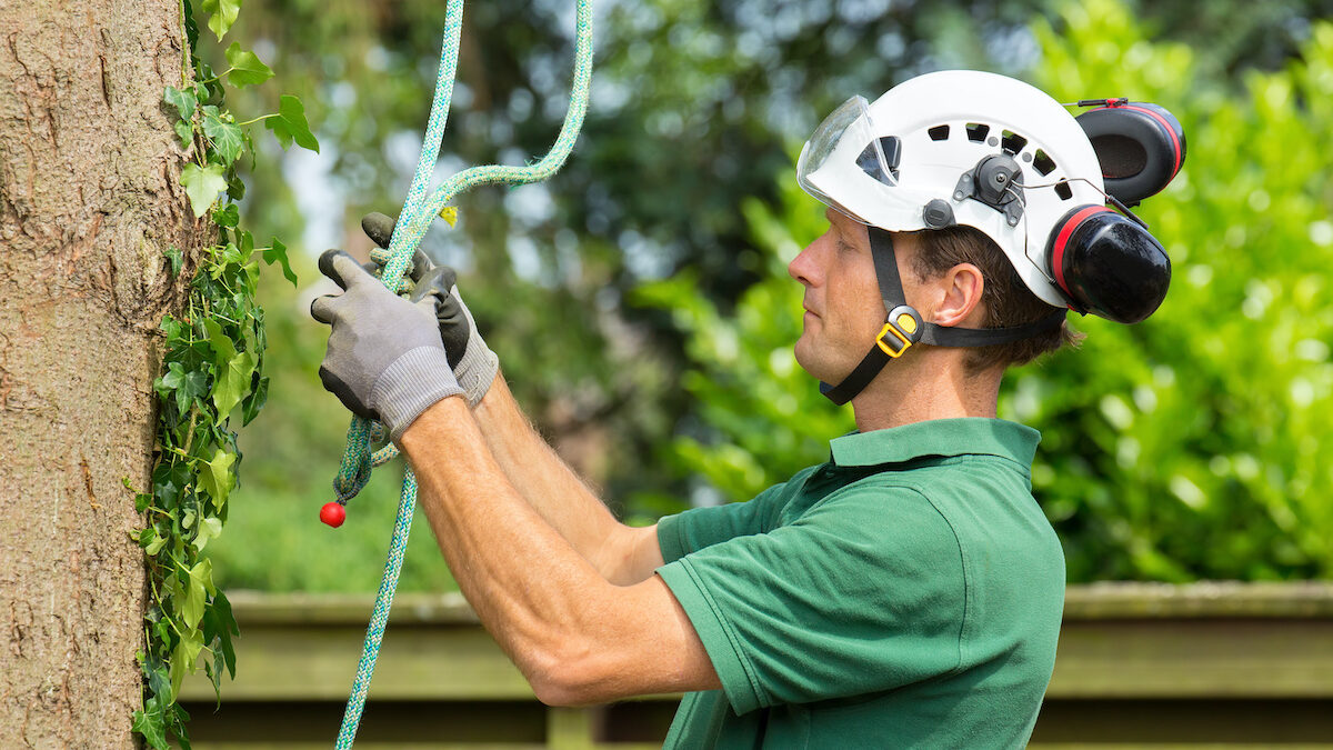 arborist assessing problem with a large tree 1200x675 - Before You Hack a Tree: Why Hire a Certified Arborist?