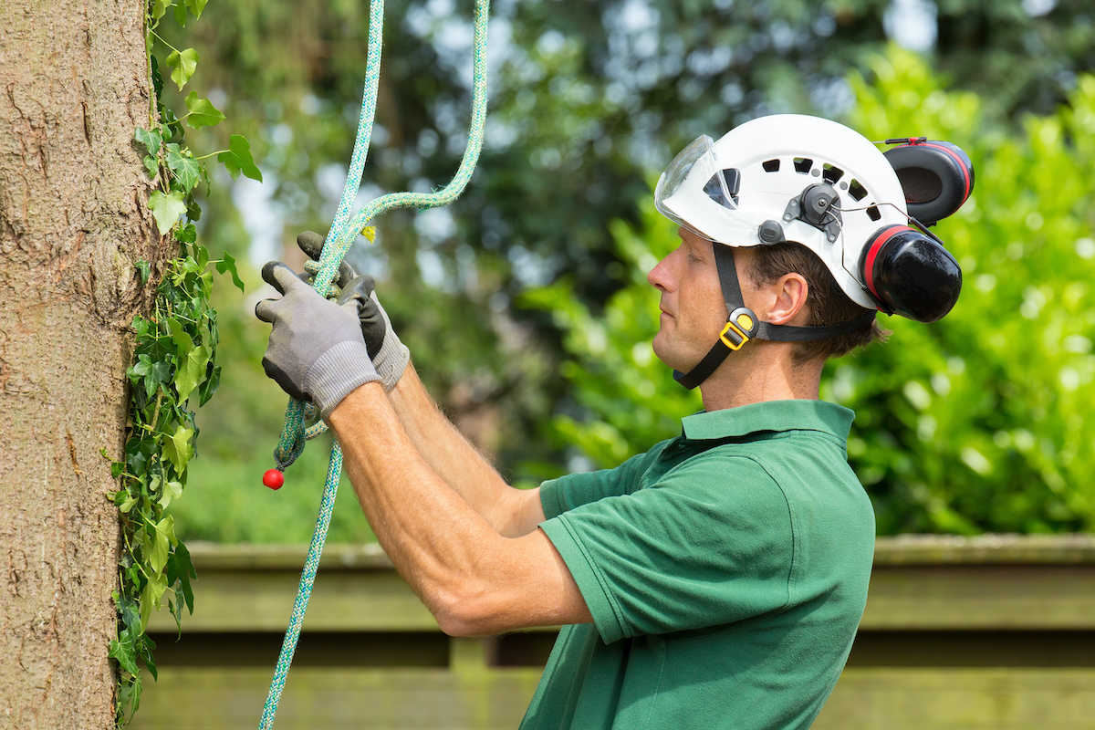 arborist assessing problem with a large tree - Before You Hack a Tree: Why Hire a Certified Arborist?