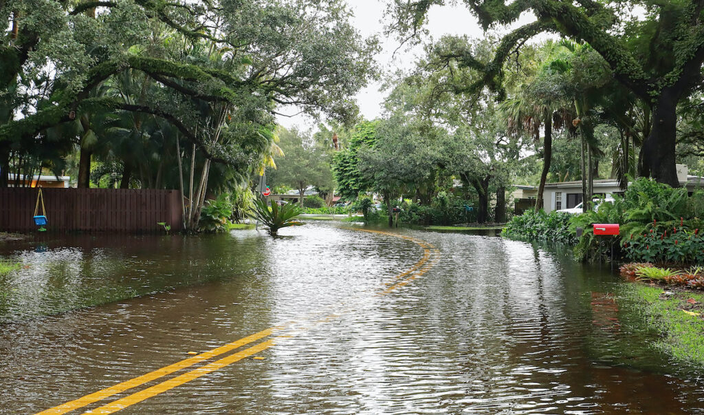 flooded florida roadway after tropical storm 1024x603 - Before You Hack a Tree: Why Hire a Certified Arborist?