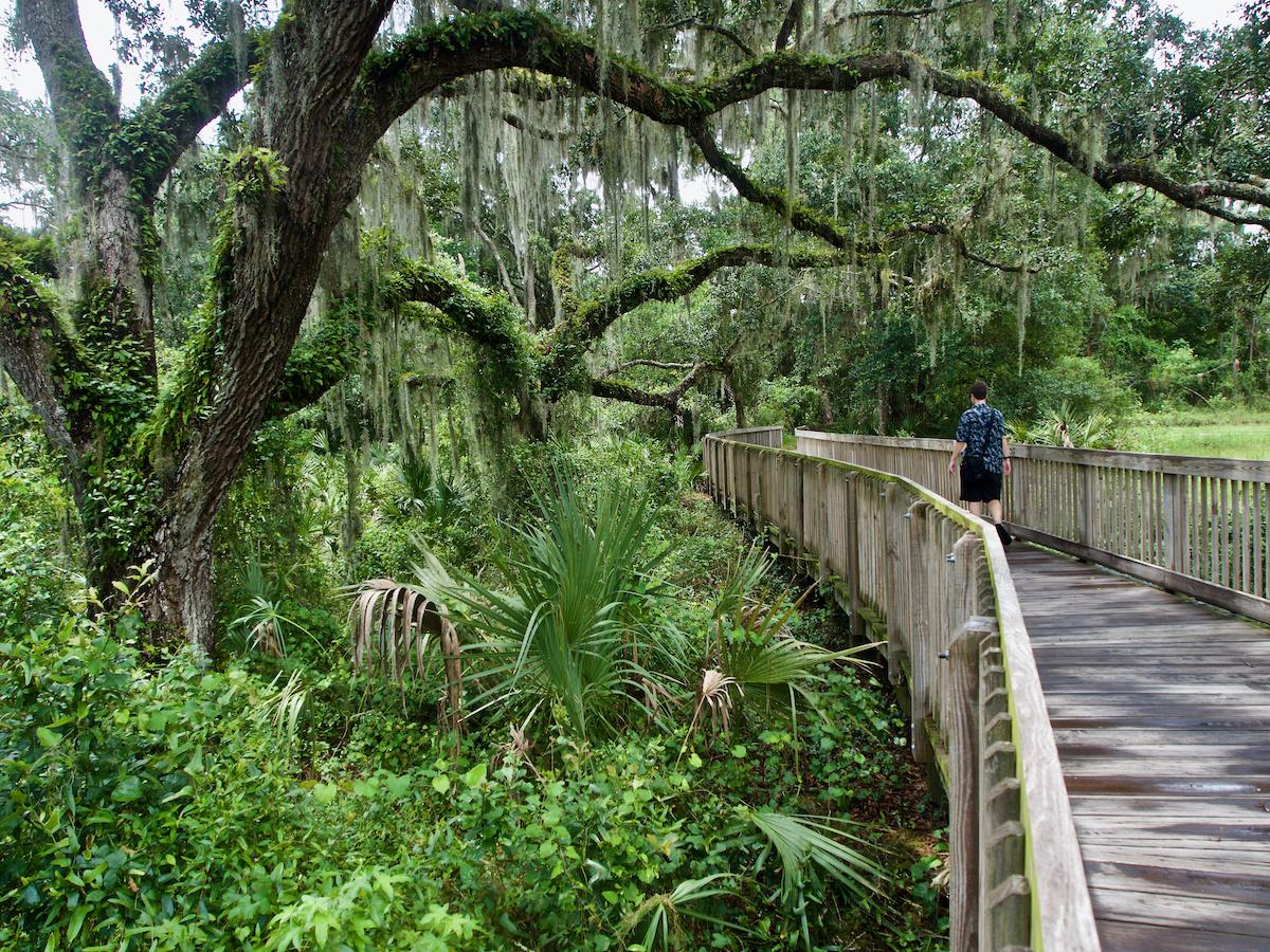 Florida Oak Mangroves Hiker on Walk Bridge - Majestic Florida Oak Tree Care