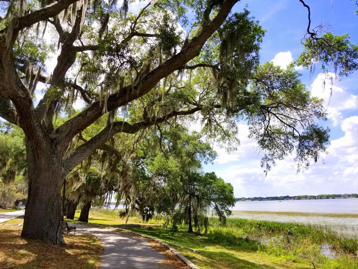 Florida Oak Trees along pathway and Bay - Majestic Florida Oak Tree Care