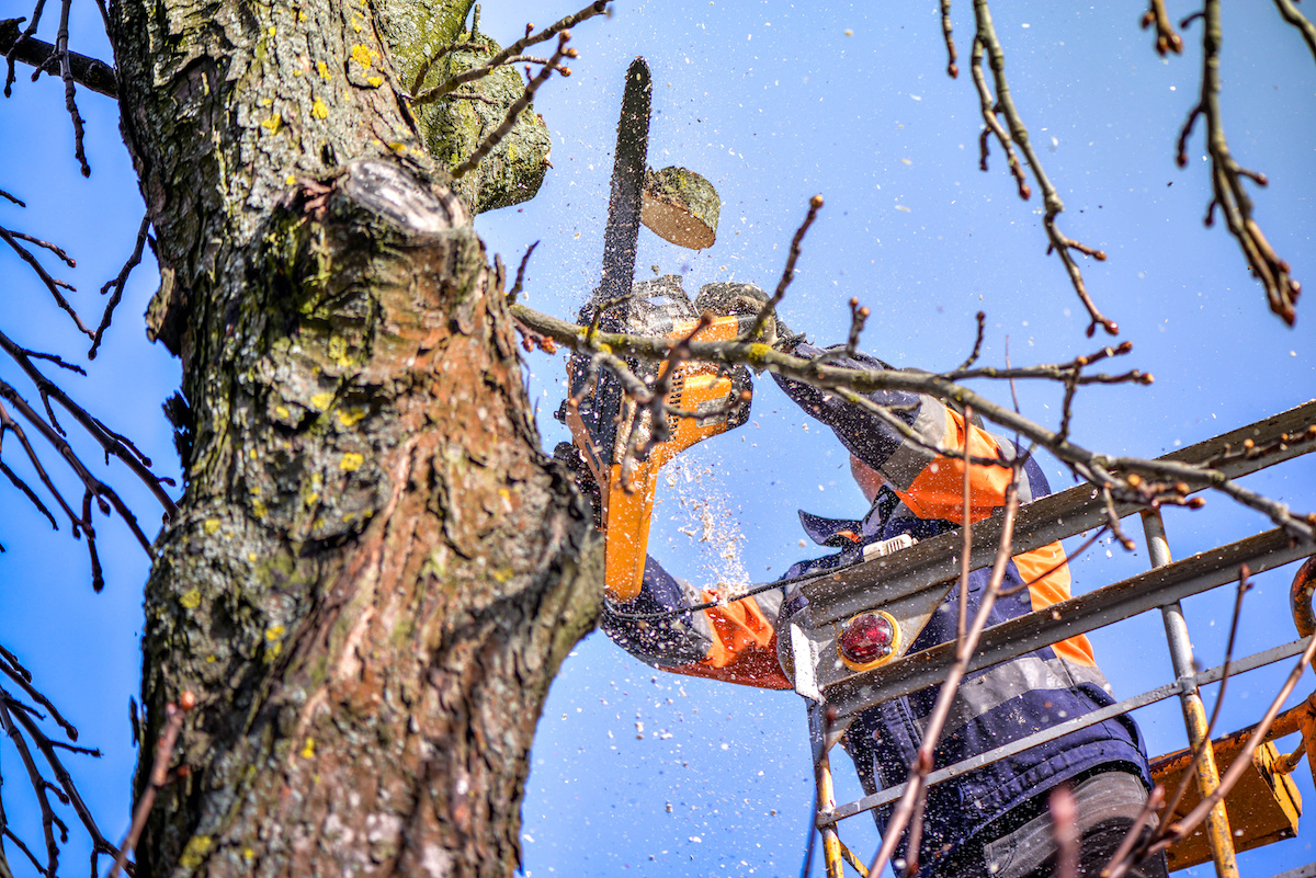 treetrimming - How to Improve Your Property with a Tree Trimming Service